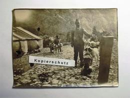 Photo Militär Italia (?), 1917, Attelage De Chiens, Dog Towing, Zughund, Hundekarren Hundegespann, Hondenkar, Dog Hund - Guerre, Militaire
