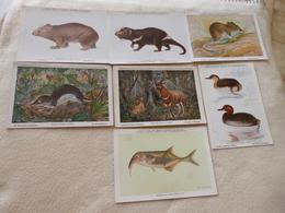 LOT DE 7  ILLUSTRATIONS ...ANIMAUX A L'INSTITUT ET AU MUSEE ROYAL DE BELGIQUE...SIGNE HENDERHYCKX... - Cartes Postales