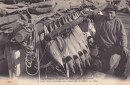 56 GROIX  A Bord D'un Grésillon Au Retour De La Pêche Au Thon    SUPER GROS PLAN  TOP Collection - Groix