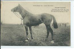M.J.Mabilais,éleveur à St Etienne De Montluc-Trotteuse HORTENSE - France