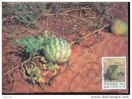 VENDA   CARTE MAXIMUM NUM.YVERT 114 FRUITS SAUVAGES - Venda