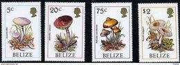 BELIZE -  Amanita Lilloi - Boletus Cubensis - Psilocybe Caerulescens - Russula Puiggarii - Mushrooms