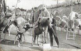 CARTE POSTALE ORIGINALE ANCIENNE : SPECTACULAIRE UN NUMERO DE CIRQUE AVEC DES OURS BLANCS POLAIRE DRESSES ETONNANT - Cirque