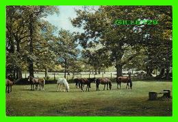 CHEVAUX - HORSES - NEW FOREST, HAMPSHIRE - J. ARTHUR DIXON No 796 - TRAVEL IN 1968 - - Chevaux