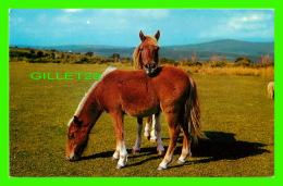 CHEVAUX - HORSES - DARTMOOR PONIES -  PHOTO PRECISION LIMITED - - Chevaux