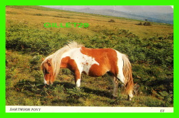 CHEVAUX - HORSES - DARTMOOR PONY -  EUROPA CARDS - ASHTON REED - - Chevaux
