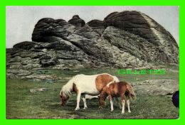 CHEVAUX - HORSES - PUB. BY JEROME DESSAIN - TYRAVEL IN 1962 - HAYTOR - - Chevaux