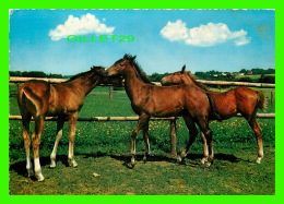 CHEVAUX - HORSES - LES 3 POULINS - KRUGER - - Chevaux