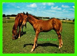 CHEVAUX - HORSES - LES 2 POULINS - KRUGER - - Chevaux