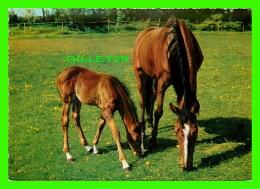 CHEVAUX - HORSES - MAMAN & FISTON - KRUGER - - Chevaux