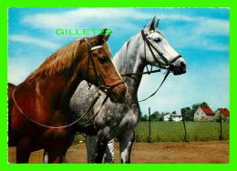 CHEVAUX - HORSES - LE BEAU COUPLE - KRUGER - - Chevaux