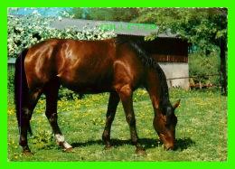 CHEVAUX - HORSES - L'HERBE EST TELLEMENT BON - KRUGER - - Chevaux