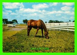 CHEVAUX - HORSES - PERSONNE EST VENU ICI ENCORE - KRUGER - - Chevaux