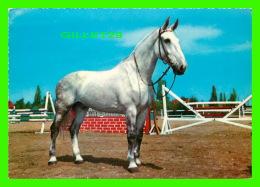 CHEVAUX - HORSES - OH QU'IL EST BEAU -  KRUGER - - Chevaux