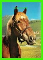 CHEVAUX - HORSES -  DENNIS PRODUCTIONS & SONS LTD - - Chevaux