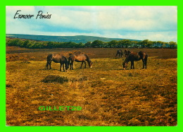 CHEVAUX - HORSES - EXMOOR PONIES -  TRAVEL IN 1988 - A SALMON POST CARD - - Chevaux