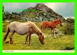 CHEVAUX - HORSES - DARTMOOR PONIES - E. NAGELE, JOHN HINDLE STUDIOS - TRAVEL IN 1977 - JOHN HINDE - - Chevaux