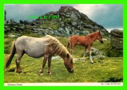 CHEVAUX - HORSES - DARTMOOR PONIES, DEVON - TRAVEL IN 1985 - JOHN HINDE ORIGINAL - - Chevaux