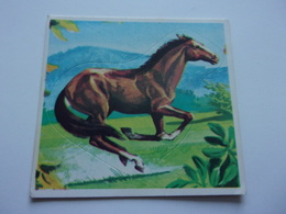PANINI SUPER ZOO N°265 Cheval De Course Cavallo Da Corsa Renpaard Race Horse - Panini