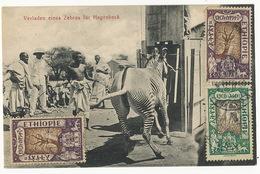 Maximum Card Verladen Eines Zebras Fur Hagenbeck Zoo Hamburg 3 Stamps Used To Romania Edit Nentwig Weilheim Bayern - Ethiopia
