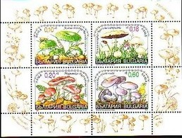 BULGARIE - Russula Virescens - Agaricus Campestri -Hygrophorus Russula - Lepista Nuda - Paddestoelen