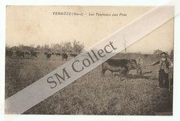 30 Vergèze, Les Taureaux Aux Prés (027) - Vergèze