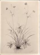 AK Foto Zeichnung Einer Blume - Ca. 1948 (33381) - Blumen