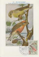 Carte  Maximum  1er  Jour   MONACO    Bec - Croisé   Perroquet   1962 - Sperlingsvögel & Singvögel