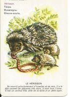 Hérisson, Carte-jeu Illustrée Nathan - Animal Insectivore, En Famille - Dessin + Texte (hedgehog) - Animaux