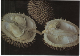Doerén -  ( Durio / Doerian / Durian) - (Fruit - Indonesia) - Andere