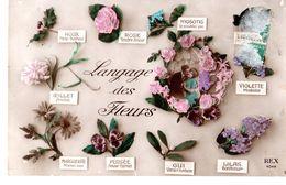 Langage Des Fleurs - Flores