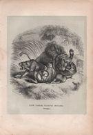 Gravure Animalière Ancienne/A GUSMAN Sculp/ Lion Jaguar Tigre Et Antilope ( Groupe) /Vers 1860-1870  GRAV299 - Estampes & Gravures