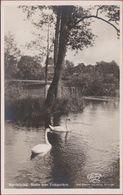 Zweden Sverige Norrkoping Motiv Fran Folkparken Sweden Suede Old Postcard Zwanen Zwaan Schwan Cygne Cisne Swan - Suède
