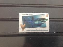 Cuba - Haaien (10) 2015 - Cuba