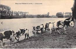 ELEVAGE VACHES - 77 MISY SUR YONNE : Troupeau De Vaches - CPA - Herd Of Cows Herde Von Kühen Kudde Koeien Manada De Vaca - Elevage