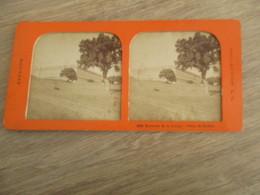 PHOTO STEREOSCOPIQUE ESPAGNE GRANJA - Stereoscopic