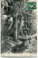 CPA - Carte Postale - France - Palmier Et Régimes De Dattes (CP964) - Autres