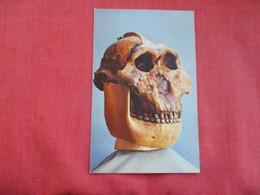 Tanzania  Museum--Skull Of Zinjanthropus  Ref 2859 - Tanzania