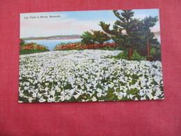 Bermuda Lily Field In Bloom Has Stamp & Cancel  -ref 2859 - Bermuda