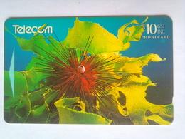 391CO Sea Urchin - New Zealand