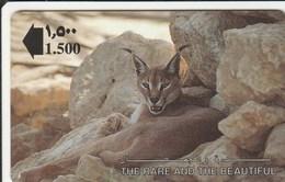 Oman - The Caracal Lynx - 13OMNA - Oman