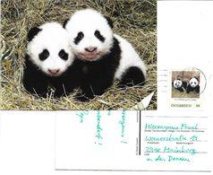 4173e: Austria- Fu Feng Und Fu Ban, Zwei Pandas Aus Dem Tiergarten Schönbrunn, Ansichtskarte & Markenmotiv - China