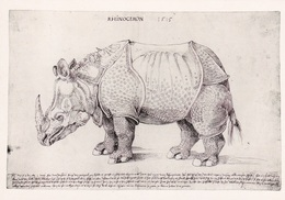 """CPM  Représentant  Un """" RHINOCEROS """"  ALBERT DÜRER - Rhinocéros"""