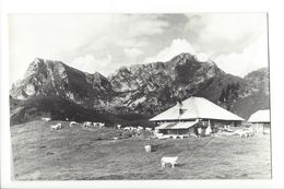 19456 - Alp Seeberg Chalet Et Vaches Schwenden - BE Berne