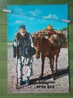 KOV 852 - HORS, HORSE, CHEVAL, ZLATIBOR, SERBIA - Chevaux