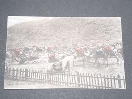 YÉMEN - Carte Postale D 'Aden - Le Marché Aux Chameaux - L 14020 - Yémen