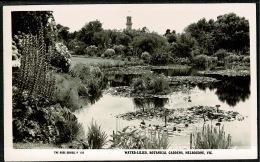 RB 1199 - Real Photo Postcard Water Lilies Botanical Gardens Melbourne Victoria Australia - Melbourne