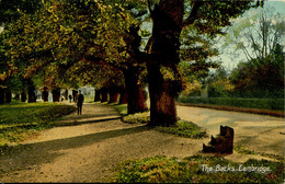 CAMBS - CAMBRIDGE - THE BACKS  Ca95 - Cambridge