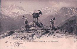 Chèvres Sur Un Sommet Des Alpes Avec Vue Sur L' Aiguille Verte (3162) - Animaux & Faune