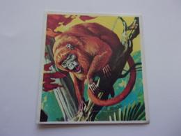 PANINI SUPER ZOO N°236 Singe Hurleur Noir Scimmia Urlatrice Brulaap Black Howler - Panini